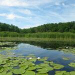 Pisciculture d'étangs et protection de la nature : le circuit-court à l'honneur !