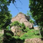 Patrimoine et biodiversité : quelle flore dans les ruines des châteaux forts des Vosges et d'Alsace ?