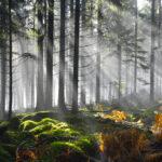 Pays de Sarrebourg : un territoire engagé pour la nature