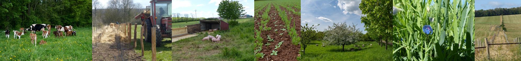 Agriculture Biologique : Installation Expérimentale d'un système de polyculture-polyélevage