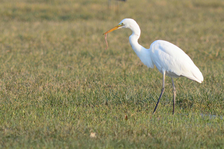 Les oiseaux du Vieil-Etang de Bairon (Natura 2000)