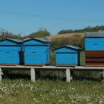 Des ruches à la centrale EDF de Blénod