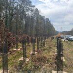Aménagement d'une tranchée forestière située sous l'emprise d'une ligne électrique RTE