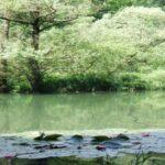 Etude des Trames Vertes et Bleues sur le territoire de la Communauté de communes du Bassin de Pompey