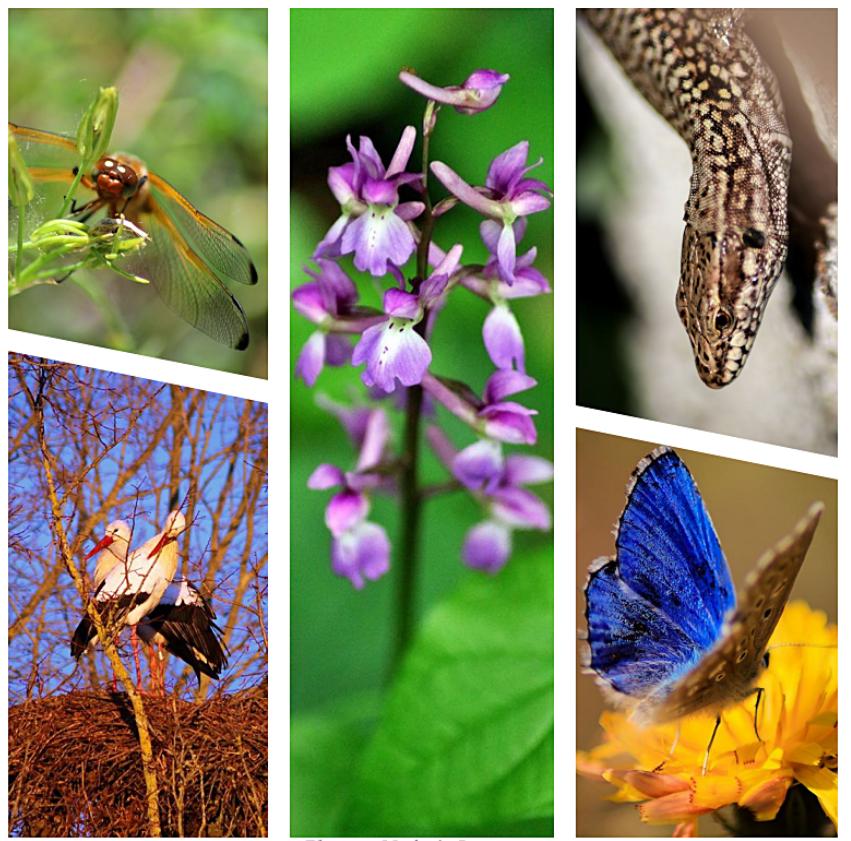 Altas de Biodiversité Communale du Parc naturel régional de la Forêt d'Orient