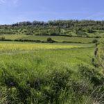 Optimisation agro écologique de la TVB sur le territoire du Groupement de Valorisation Agricole de l'Amezule